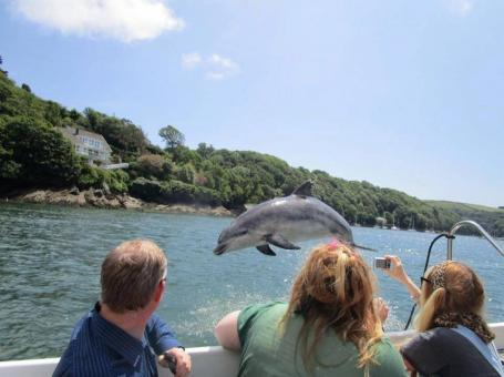 Cornwall Dolphin