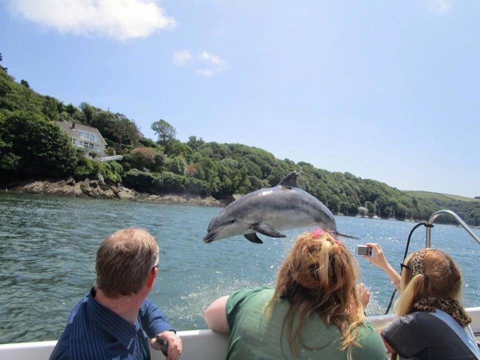 Cornwall Dolphin