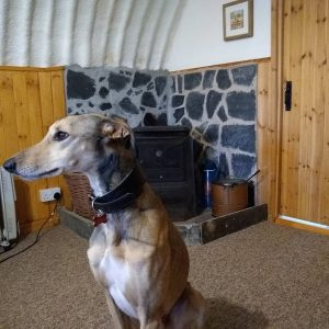 Boturnell Barns quirky dog friendly holidays