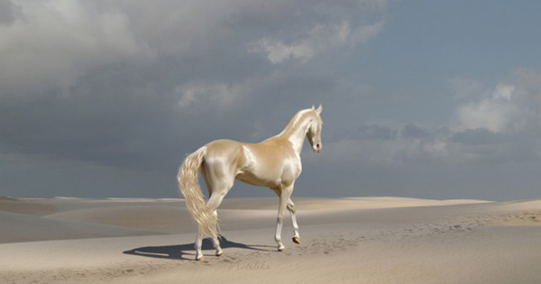 'Most stunning animal on Earth' - Horse dipped in Gold. Photos