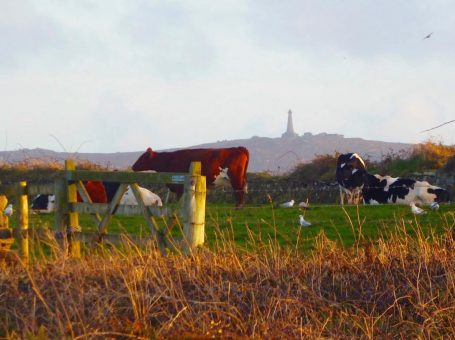 Carn Brea | Credit Tracey Pascoe