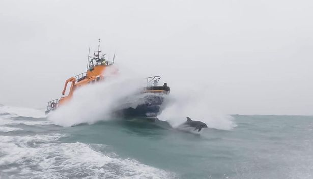 Dolphins leaping next to RNLI Penlee lifeboat in Mount's Bay, Cornwall