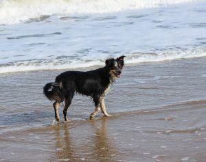 Dog Friendly Bars in Cornwall