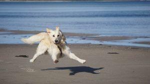 Dog | Beach | Cornwall