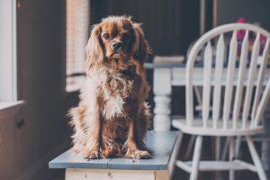 Dog Friendly Pub | Cornwall