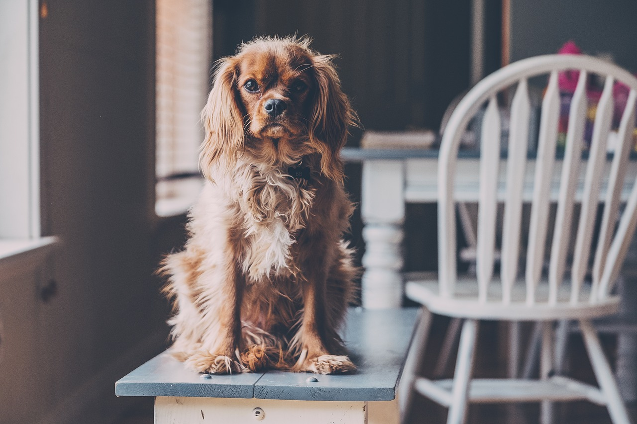Top 10 Dog Friendly Bars and Pubs in Cornwall | Holidays in Cornwall | 2020
