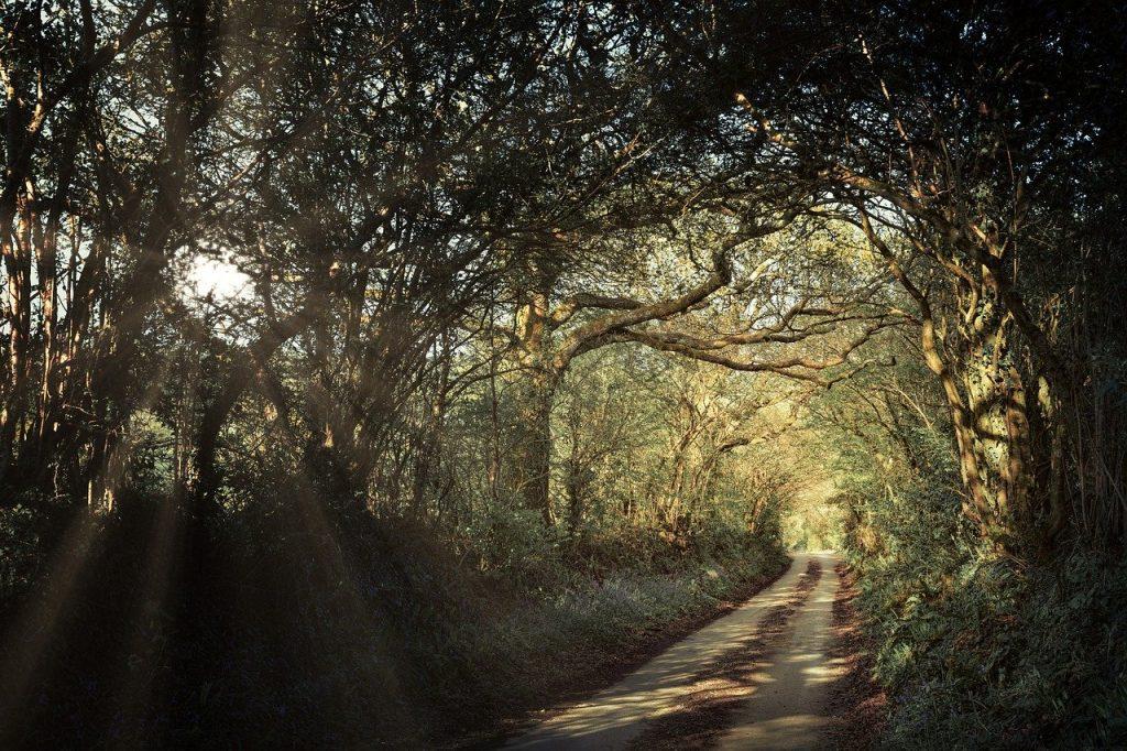 Cornwall Cycle Trails